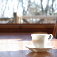 木漏れ日のカフェ
