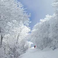 牧の戸の樹氷